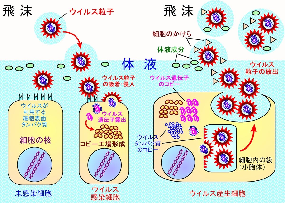 エアロゾル 感染